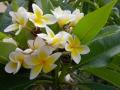 11-flower009.jpg