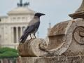 Forum_Romanum02